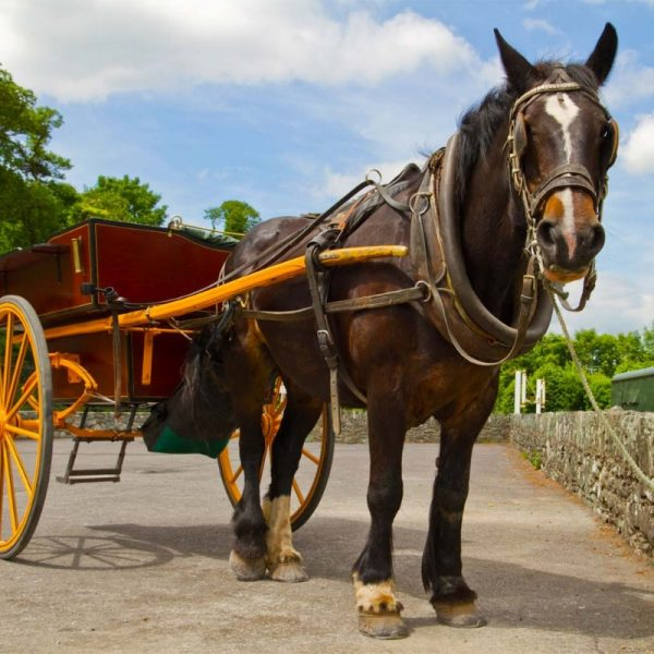 Killarney-horse-and-carriage-tours